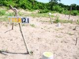 Veracruz primer lugar en fosas clandestinas