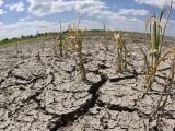 Sequía pega a 44 municipios